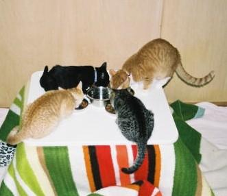 ネコ預かります。