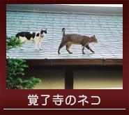 覚了寺のネコ